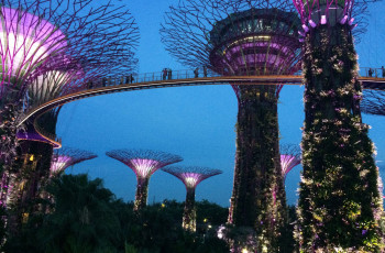 "As ""Super Tree Grove"" no Gardens By The Bay"